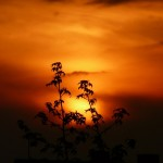 『風に立つライオン』のロケ地3選!宇久島、鍋冠山公園、伊王島