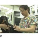 獣医、蓮岡元一の経歴と評判!小さな命を救うプロフェッショナル!