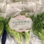 富士通のレタスがガイアに登場!低カリウム野菜、キレイヤサイとは?